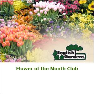 English Gardens Flower Club